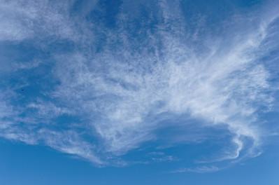 S. Dragonfly Sky