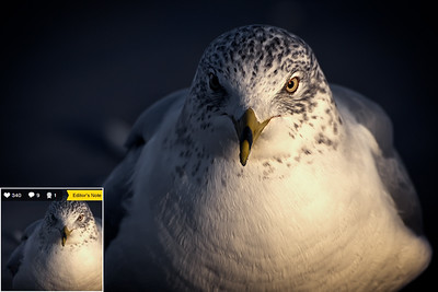 The Mind of a Seagull