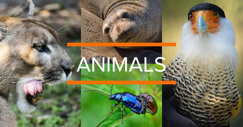XplorMor International Animal Kingdom Collage