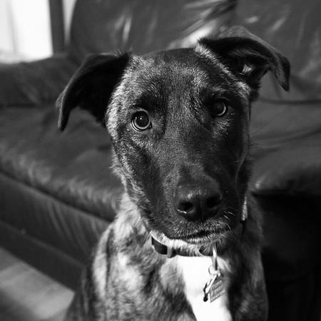 Diego the Dog