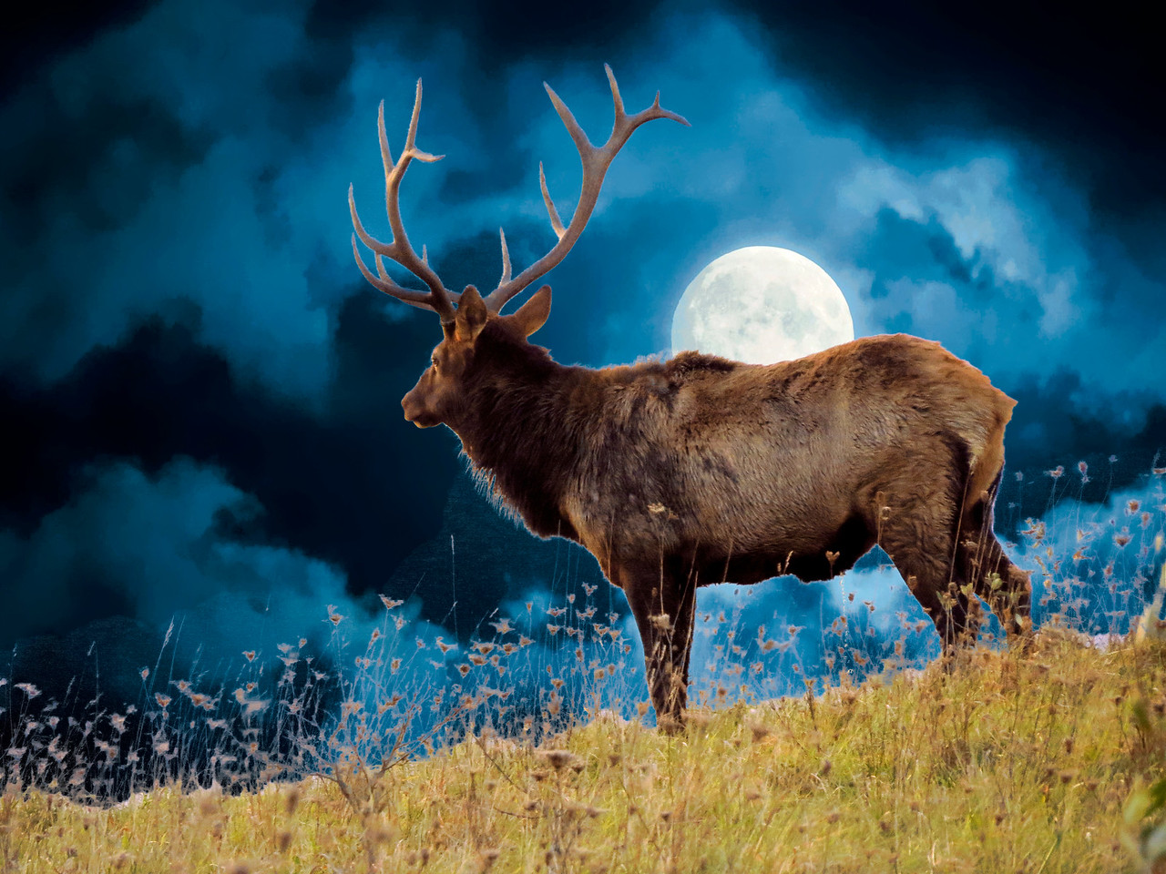 Large Bull Elk on moonlight hilltop.