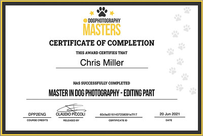 The UK's first certified Dog Photography Master