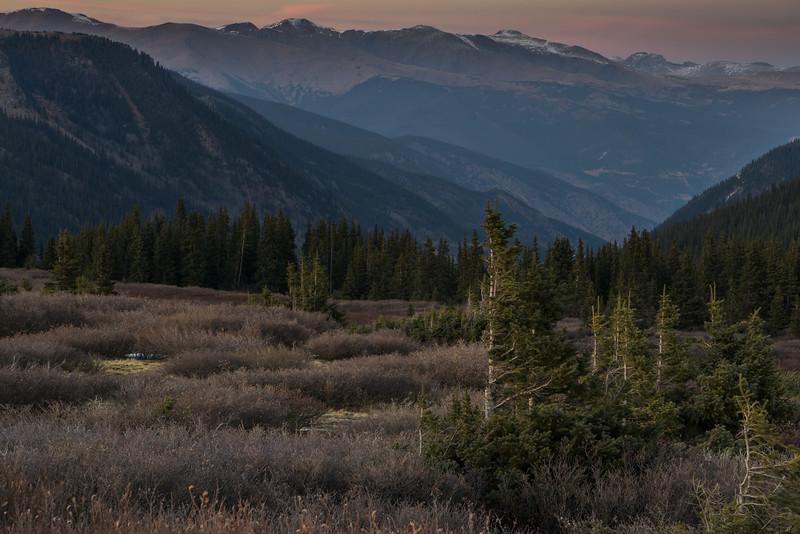 Guanella Pass Pines