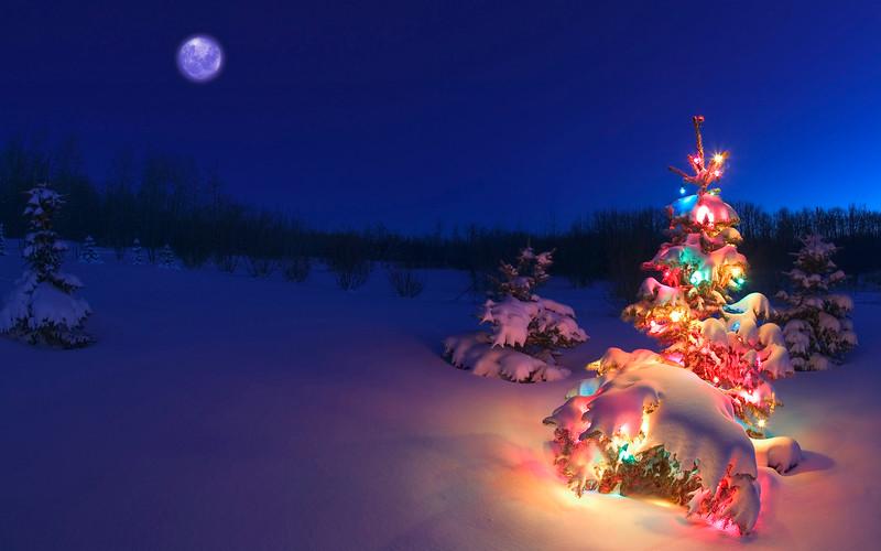 Christmas tree glowing at night in snow, Alberta, Canada