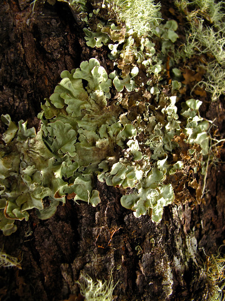 Because it remains rather temperate in the area and with ample humidity, there is a lot of fungus and moss that grows in the shaded areas of the forest.