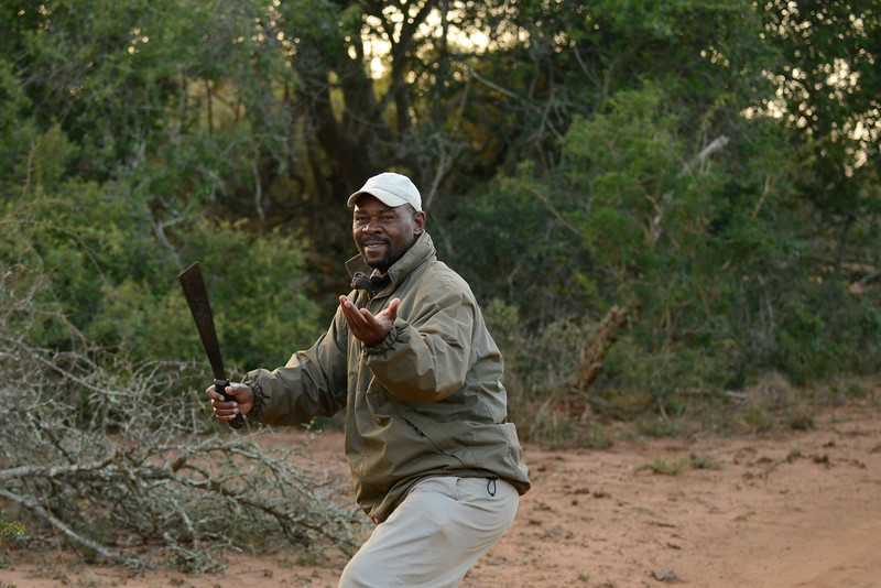 Our Phinda tracker displays his machete skills for the guests.