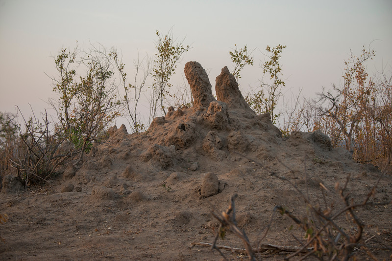 Termite mound with double chimney.
