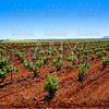 Ribera Guadiana vineyards Extremadura Spain