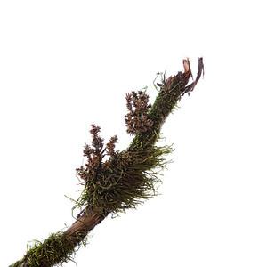 Moss on a Stick