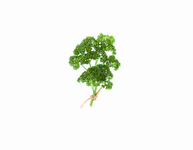 Curley Parsley _ Petroselinum Varicrispum