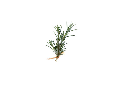 Upright Rosemary _ Rosemarinus Officianalis