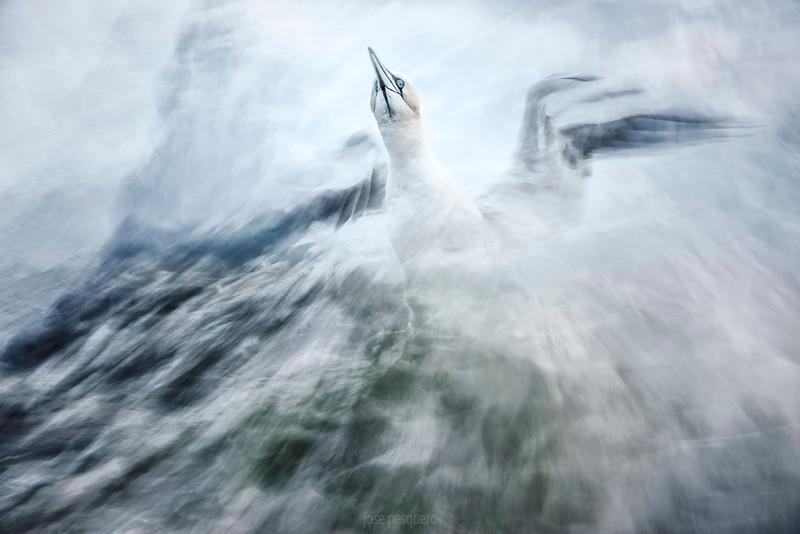 Overall Winner - L'Oiseau Photo Contest