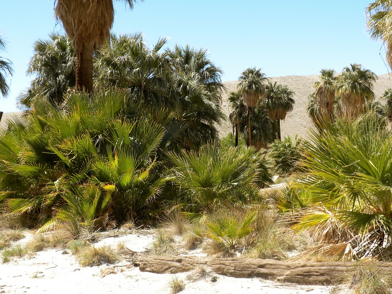 Jeep tour to the Earthquake fault area of Palm Desert, the Oasis and mining town