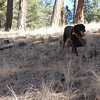 Onyx at SAR practice in Jemez