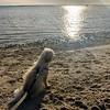 Sarah at the beach  1-19-19