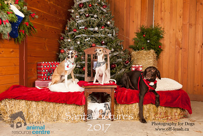 3478_SARC_OFF_LEASH_SANTA_2017