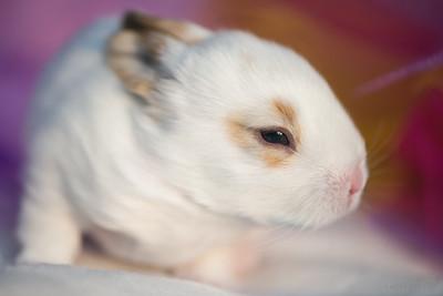 20150630-SARSBC-Baby-Bunnies-078