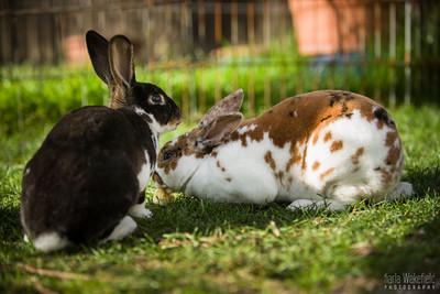 20150407-SARSBC-Bunny-Rescue-116