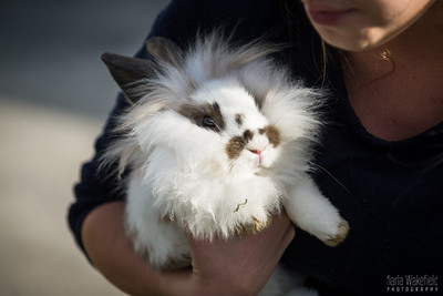 20150407-SARSBC-Bunny-Rescue-092