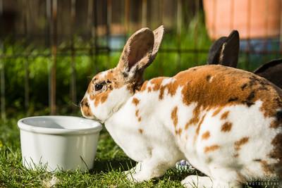20150407-SARSBC-Bunny-Rescue-143