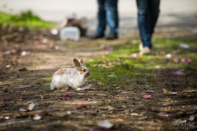 20150407-SARSBC-Bunny-Rescue-023