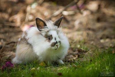 20150407-SARSBC-Bunny-Rescue-033