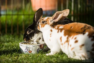 20150407-SARSBC-Bunny-Rescue-138