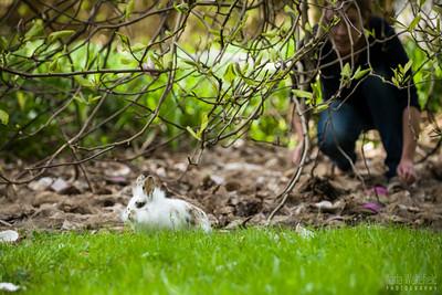 20150407-SARSBC-Bunny-Rescue-012