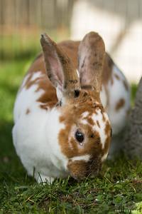 20150407-SARSBC-Bunny-Rescue-119