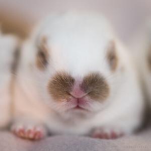 20150630-SARSBC-Baby-Bunnies-120