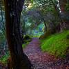 Magenta Trail