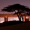 Monterey Night M