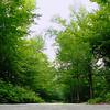 Maine Backroad