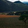Lone Tree Carmel Valley