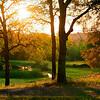 Auburn Sun
