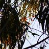Butterfly Trees Cluster II