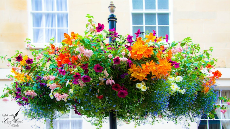Street Flowers in Bath England