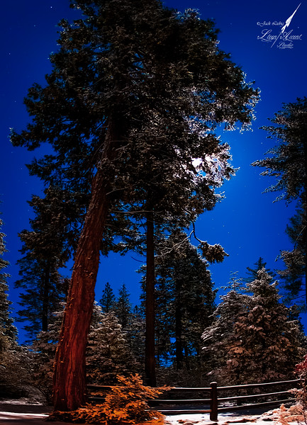 Arnold Forest Moon