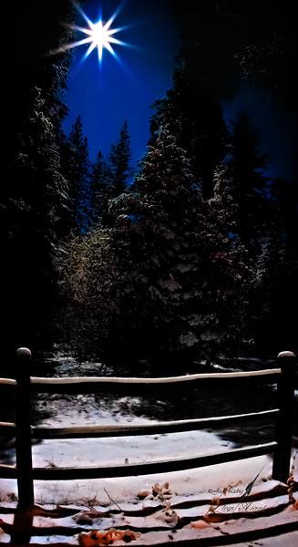 Arnold Forest Starburst