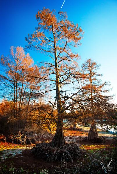 Shin Pond Trees