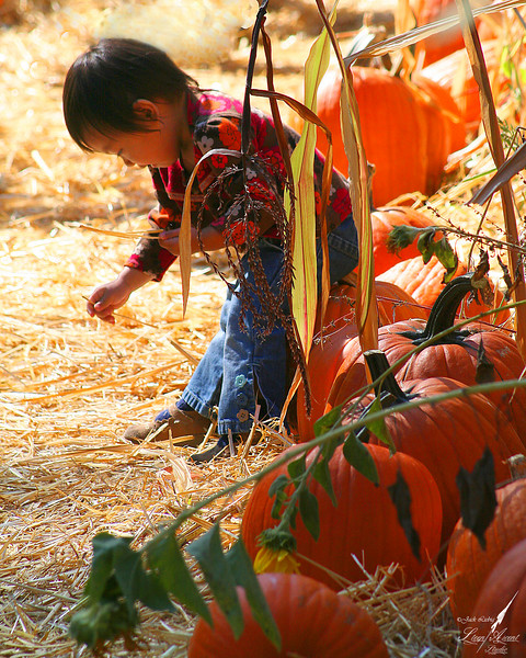 Pumpkin Patch Magic