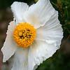 Flower MGC