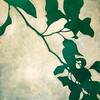 Paul-Shadows 10-15x15p