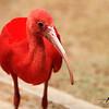 Flamingo Teen