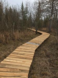 Fringed Gentian Bog Auggie's Boardwalk Fermoy Road Sax-Zim Bog MN IMG_7770