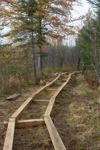 Fringed Gentian Bog Auggie's Boardwalk Fermoy Road Sax-Zim Bog MN IMG_2375