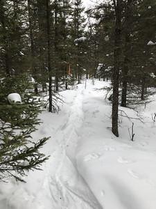 Snowshoeing at Yellow-bellied Bog Sax-Zim Bog MN IMG_0056