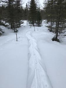 Snowshoeing at Yellow-bellied Bog Sax-Zim Bog MN IMG_0048