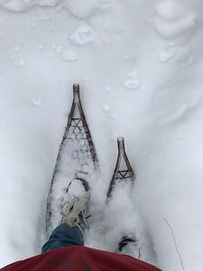 Snowshoeing at Yellow-bellied Bog Sax-Zim Bog MN IMG_0050