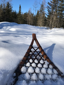 Snowshoeing at Yellow-bellied Bog Sax-Zim Bog MN IMG_0234